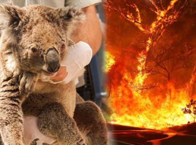 #PrayForAustralia, SelamatkanKehidupanSatwa Liar di Australia