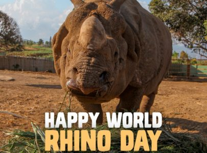 HAPPY WORLD RHINO DAY