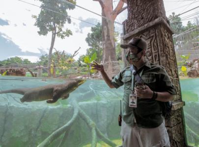 Kenalan Sama Chico Yuk, Si Gemas Giant Otter Koleksi Terbaru Batu Secret Zoo